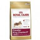 Cavalier King Charles 27