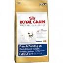 French Bulldog 26 Adult